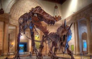 Free Museum Day at the Natural History Museum @ Natural History Museum | Los Angeles | California | United States